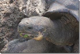 Tortoises are slow